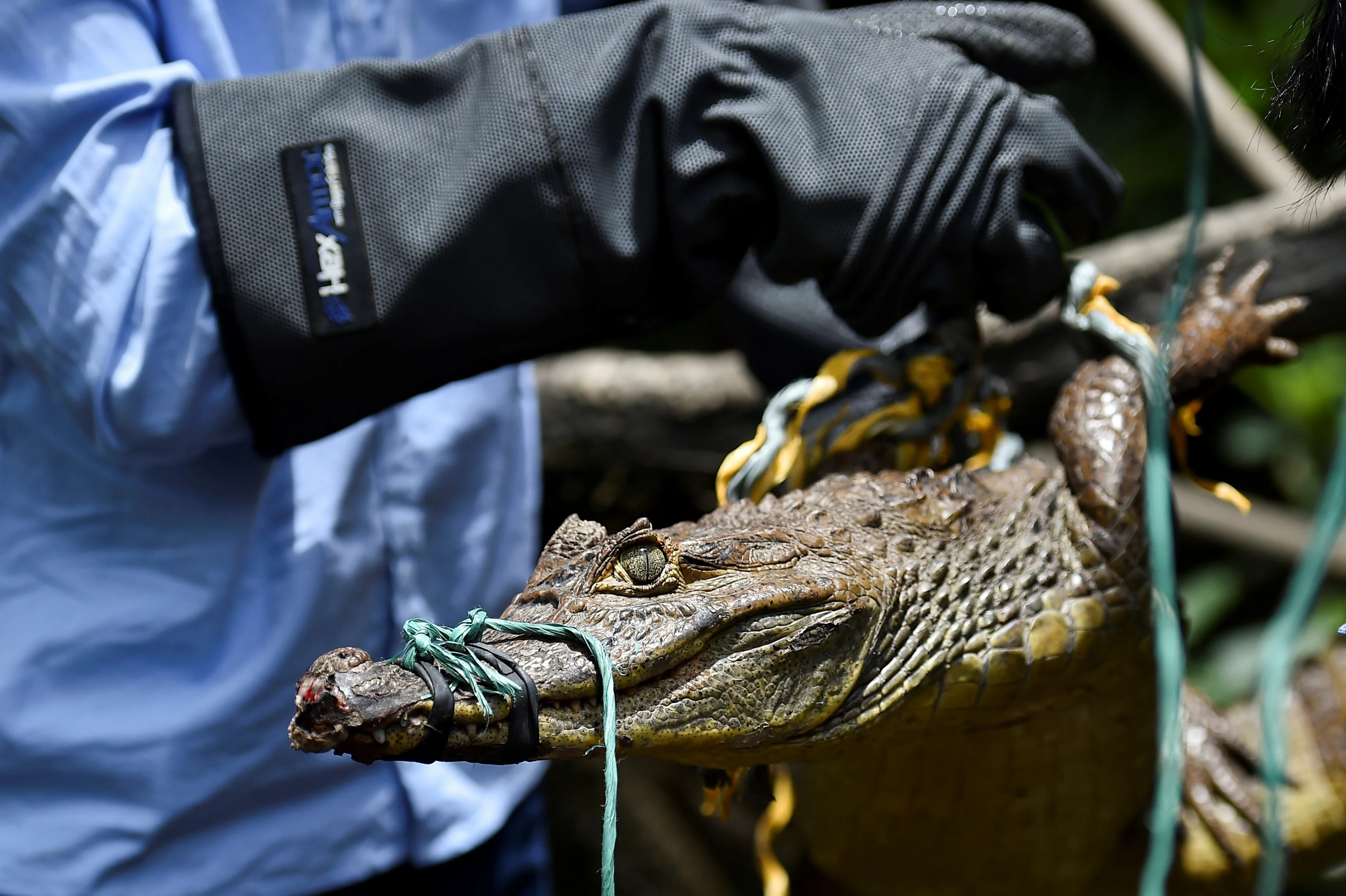Illegal wildlife trade intrinsically linked to drugs and weapons trafficking, report finds