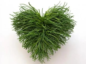 18-Agretti-Heart-Corbis.jpg