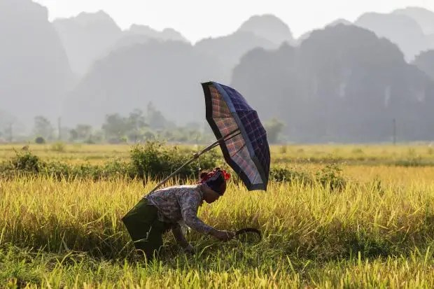 rice-paddy-new.jpg