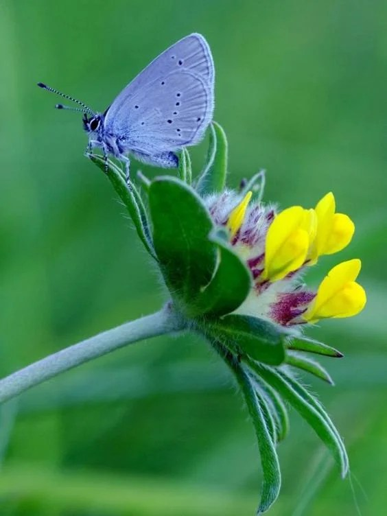 Image result for Small blue