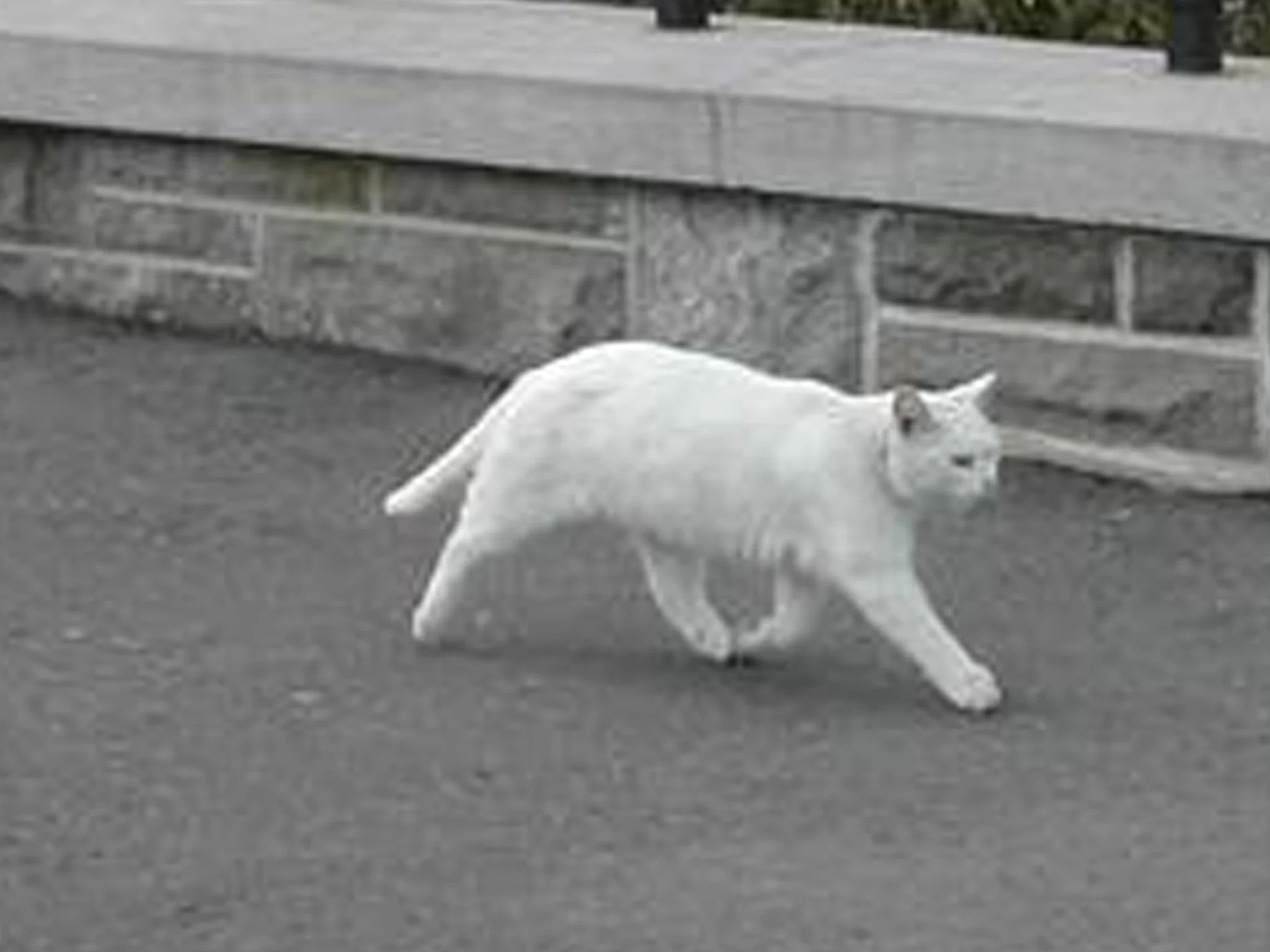 Revealed The Half Cat Not Created By Google Street View The