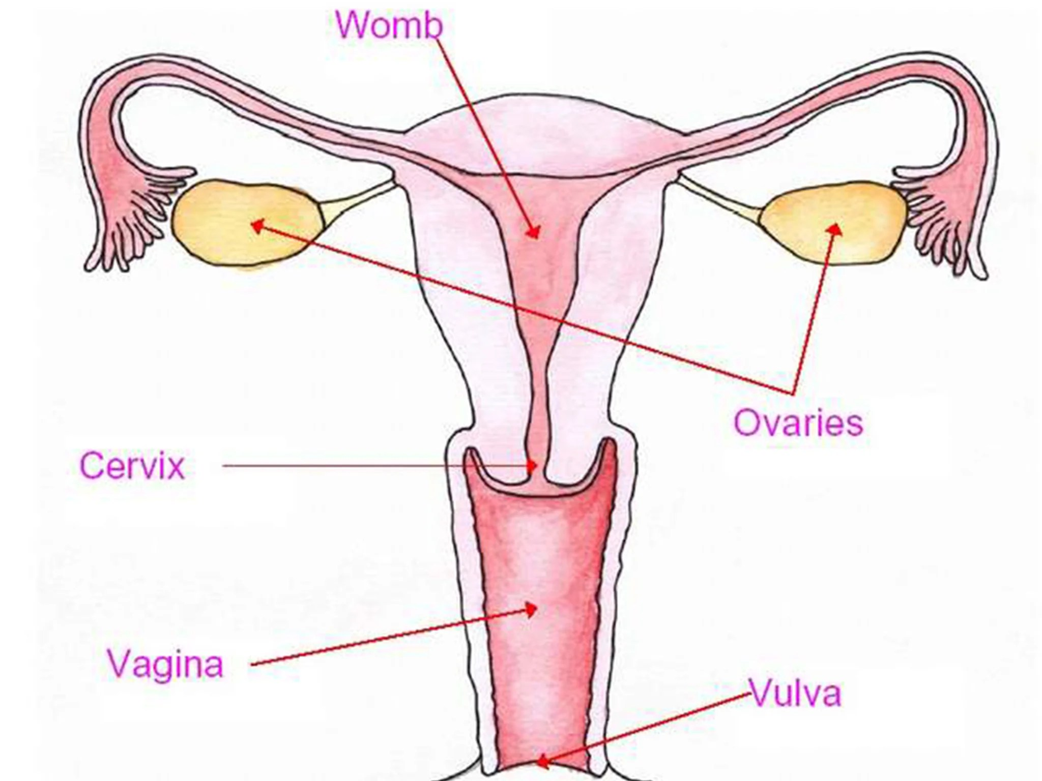 Half Of Young Women Unable To Locate Vagina And 65 Find