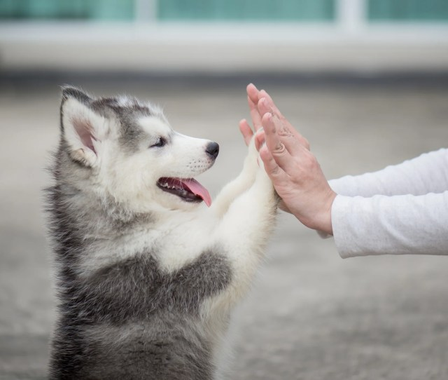 The Strangest Emotional Support Animals On Planes  C2 B7 Home News