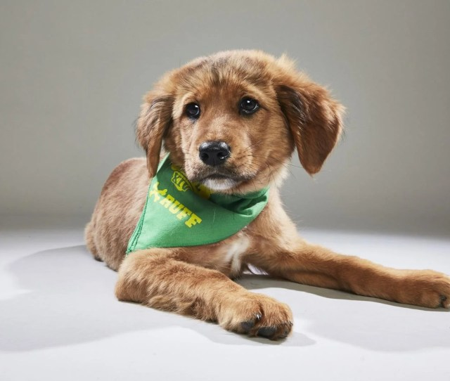 Puppy Bowl Xiv Will Feature Two Guest Puppies Rescued From Puerto Rico