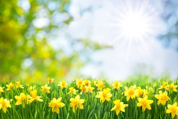 Image result for spring pictures