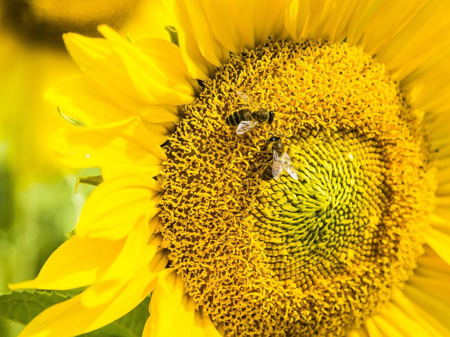 Bees Have Human Like Ability To Link Symbols To Numbers