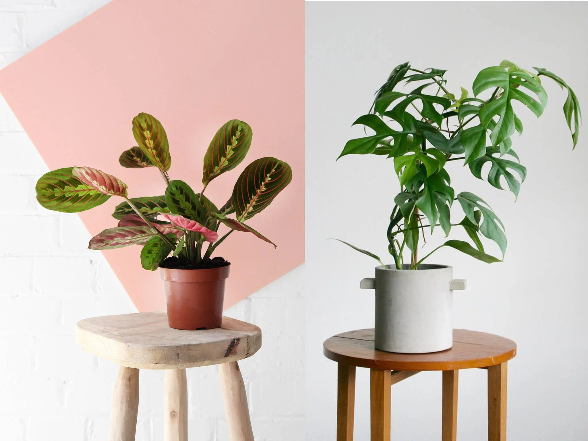 Best House Plants That Will Boost Your Mood And Space