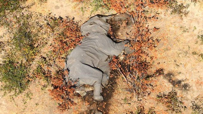 'Conservation Disaster': Over 350 Elephants Found Dead In Botswana Since May & No One Knows Why 7