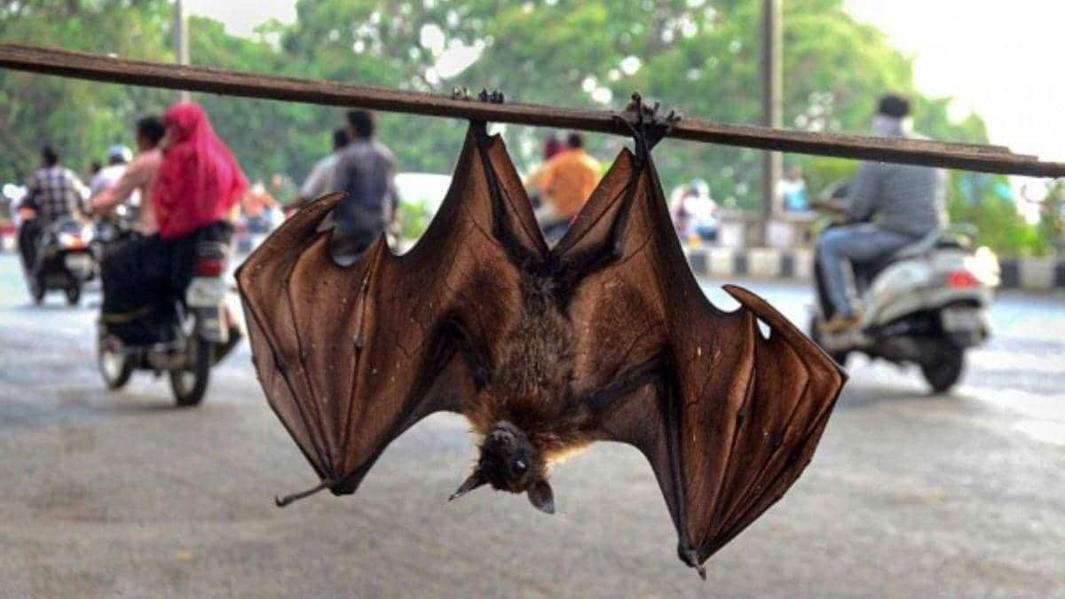 WHO Says COVID-19 Most Likely Transmitted To Humans From Bats Via Another Animal, Rules Out Wuhan Lab Leak