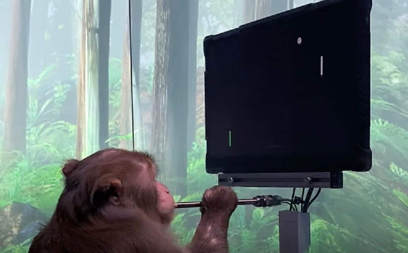 Elon Musk's Neuralink Shows How Monkey Plays Pong with his Mind | Watch
