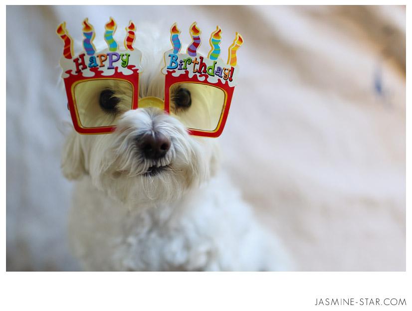 С днем рождения животные открытка