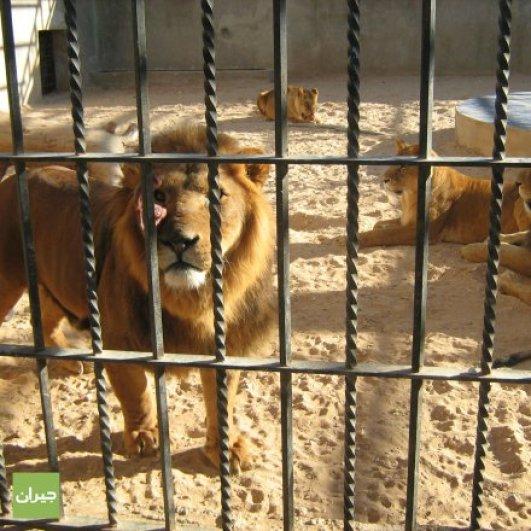 Image result for حديقة الأردن للحيوان
