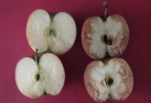 Two apples split in half.