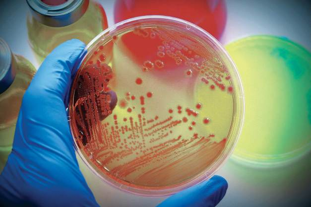 Image result for microbiology