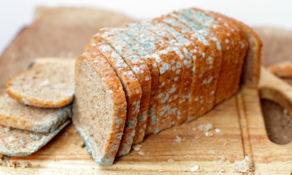Image result for mouldy bread
