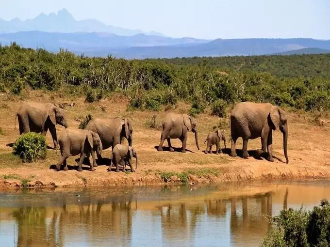 Top 7 wildlife sanctuaries of India