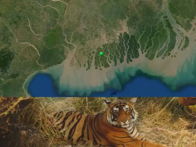 Sundarbans Delta and the famous Royal Bengal Tiger (Sugoto Roy, IUCN)