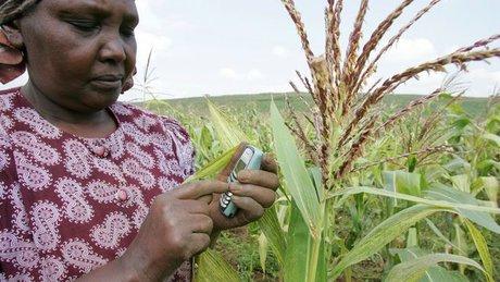 fermière kenyane agriculture tech agritech