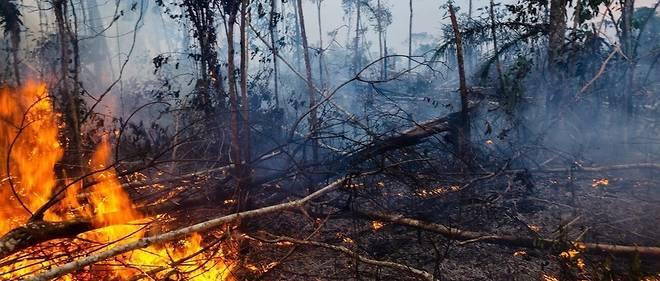 Brésil : l'ONU se réunit, l'Amazonie brûle toujours - Le Point