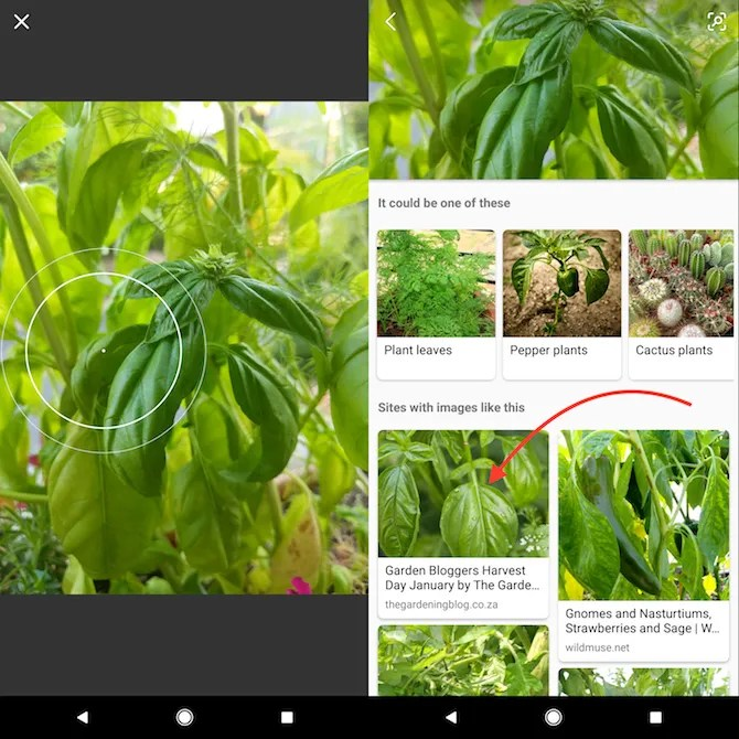 Bing - How to Identify Plants and Flowers Using Your Phone Camera