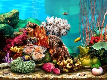 Living Marine Aquarium 2 screensaver