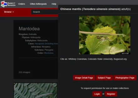 Insect Images Site