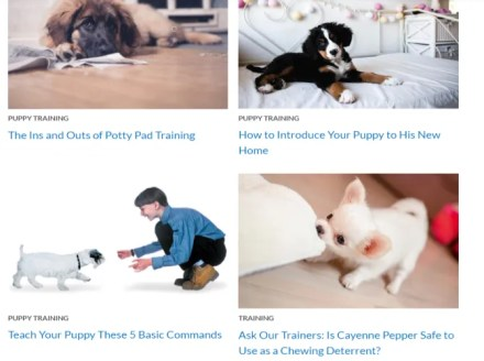 American Kennel Club Free Dog Training