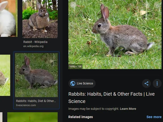 Basic Google Image Search