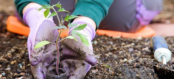 Κηπουρική: Τι να σπείρετε τον Νοέμβριο