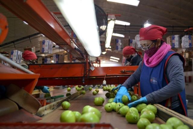 La Nación redujo los derechos de exportación de 67 nuevos productos de las economías regionales: 17 pasarán a tributar 0%