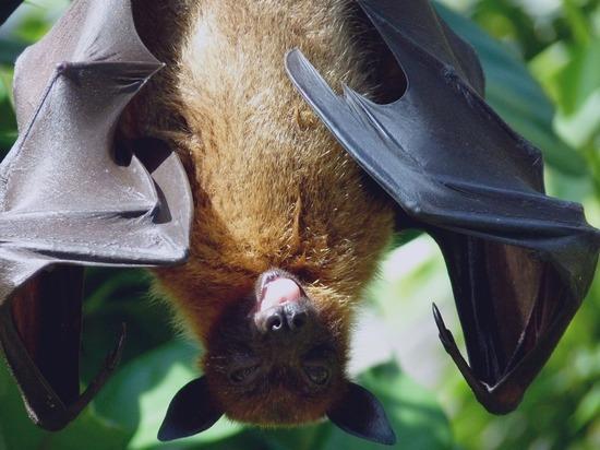 Биолог рассказал, какие животные заразят людей новыми опасными вирусами