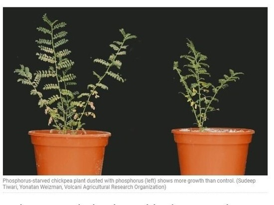 Ученые открыли растения, питающиеся пылью