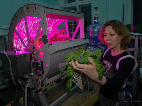 Россия начнёт выращивать в космосе салат и помидоры