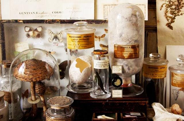 8 astuces deco pour une ambiance cabinet de curiosites