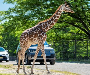 The Best Nj Zoos And Aquariums For Animal Encounters With Kids Mommypoppins Things To Do In New Jersey With Kids