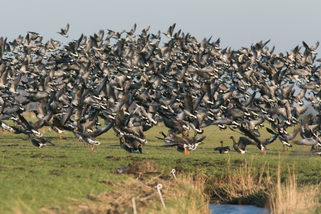 Natuur en Bos opens the hunt for the biggest culprit of exotic birds to prevent 20 million euros in damage