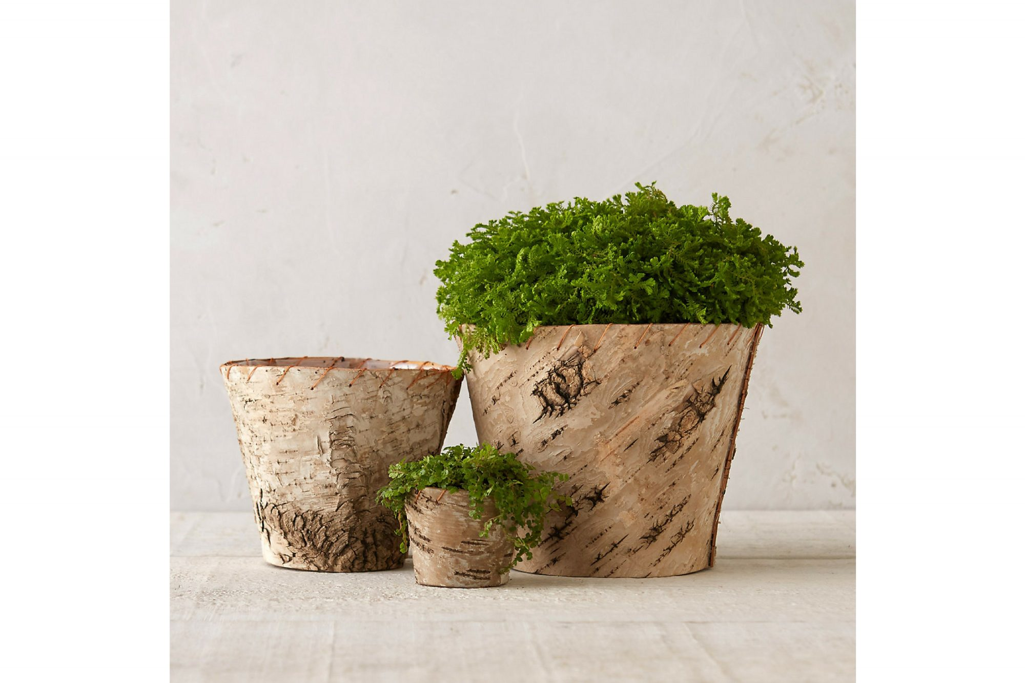 16 Perfect Pots For Indoor Plants Under 50 Southern Living