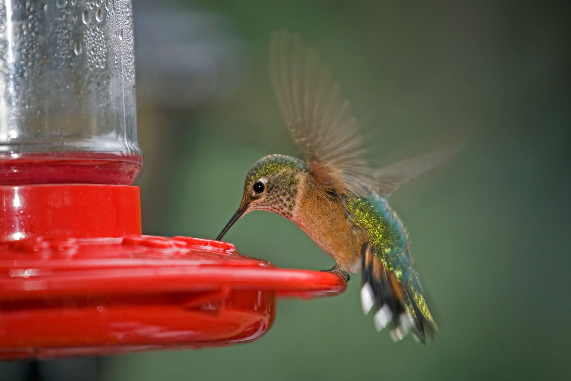 6 Things True Hummingbird Lovers Know Southern Living