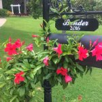 The Best Mailbox Flowers For Instant Curb Appeal Southern Living