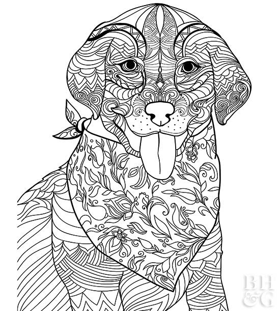 coloring pages dog # 25
