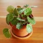 Top Plants For Terrariums Better Homes Gardens