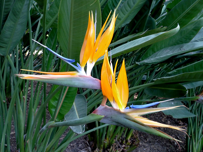 Bird Of Paradise Better Homes Gardens