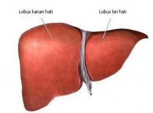 Gejala Sakit Liver