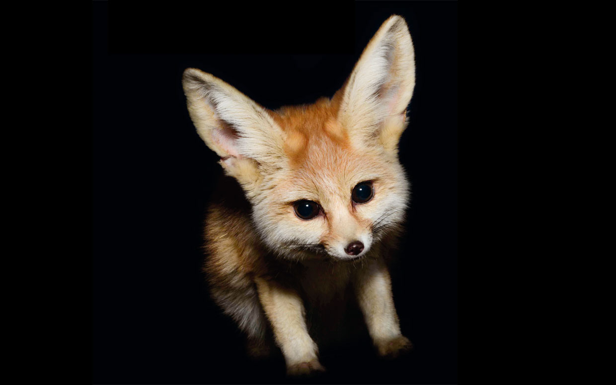 10 Of The Cutest Nocturnal Animals In The World