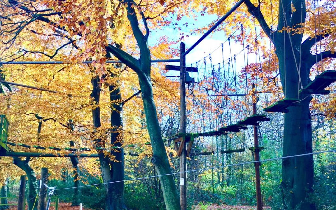 2 for 1 Discount at Trafford Treetop Adventures