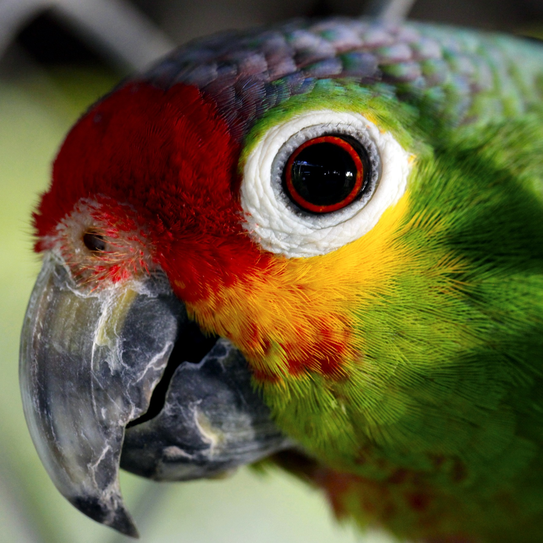 close up photo of green red and yellow bird · free stock photo