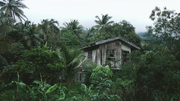 Forest, Hidden, Hut, Nature