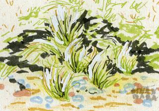Beach Grass ACEO by Alexandra Cook
