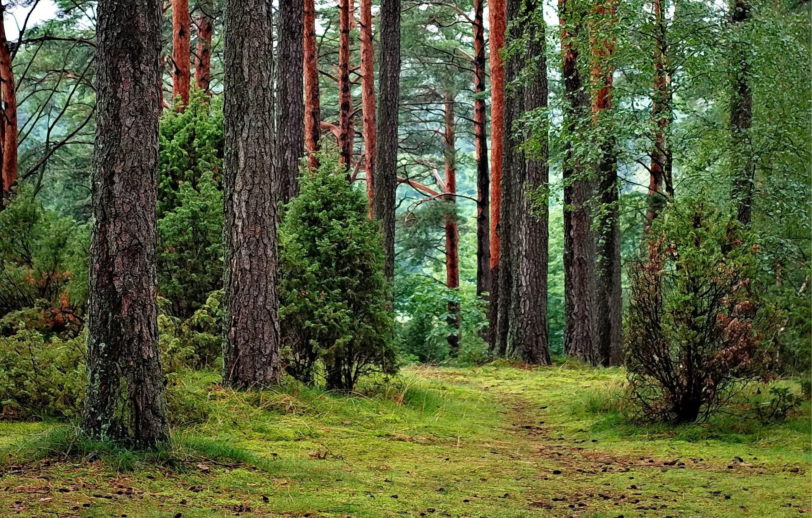 Bosque con distintos tipos de árbol