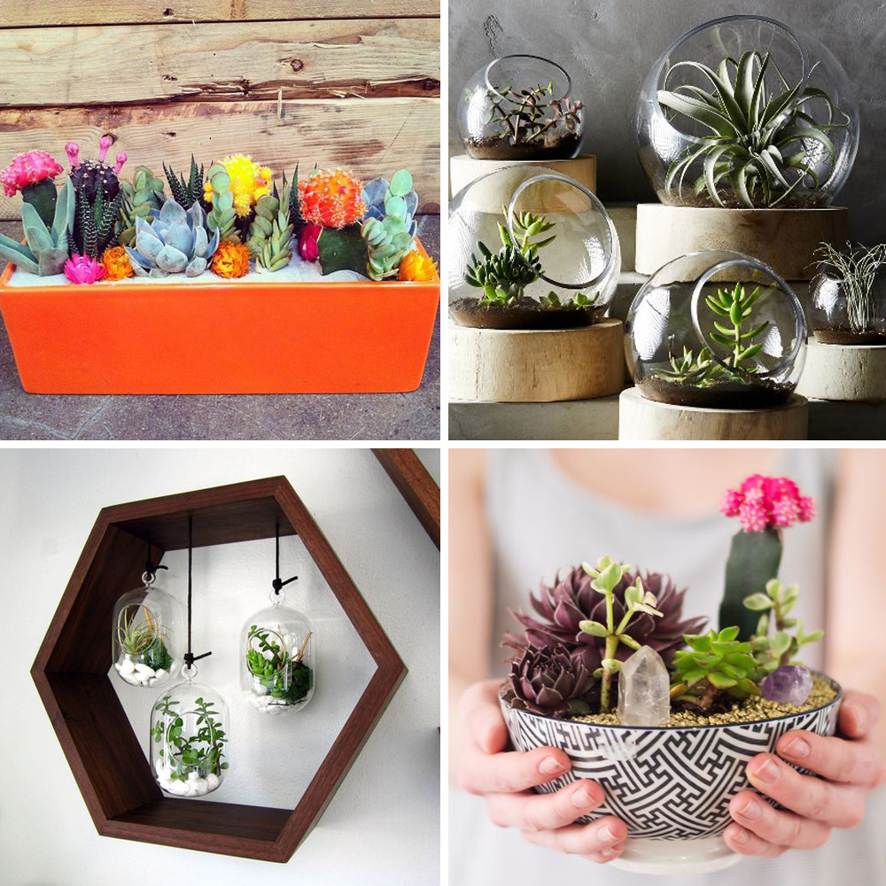 Pinterest 25 Ides Dco Avec Des Cactus Des Succulentes